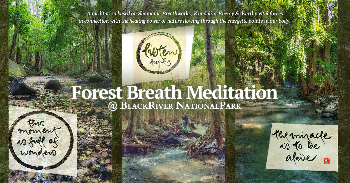 Forest Breath Meditation