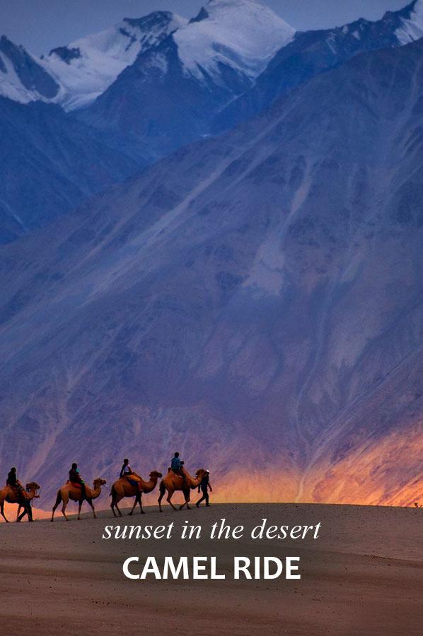 l_camel